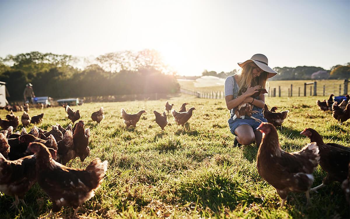 Frau mit Hühnern auf grüner Wiese