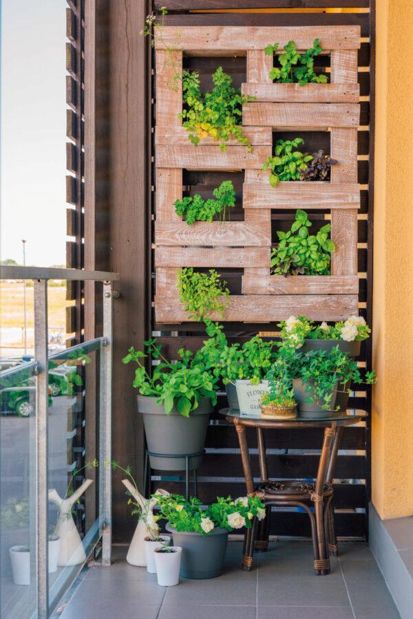 Gut fürs Wohnklima: Bepflanzter Sichtschutz Bild Nr. 6376, Quelle: ingusk, 213714215, Adobe Stock/BHW Bausparkasse