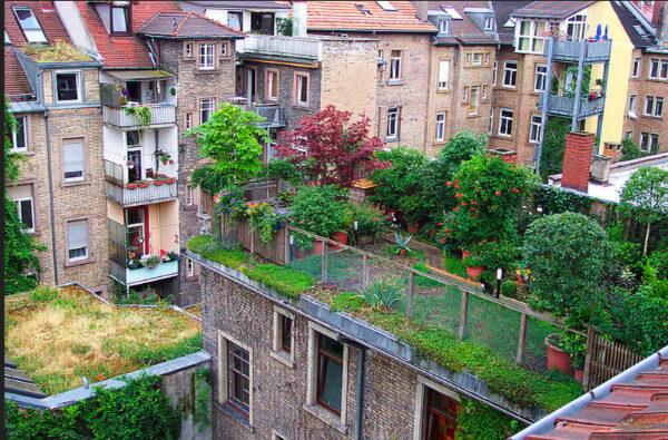 Umweltschutz von oben: begrünte Dächer