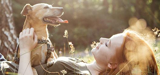Tierhalter: Denken Sie an die Tierhalterhaftpflichtversicherung